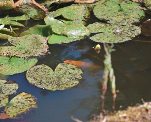 les poissons de la mouynarie